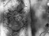 Latsch_Friedhof_Grabplatte_AS-Albumphoto_130