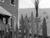 74_Vahrn_Palmbuschen-am-Gartenzaun_AS-KB_018