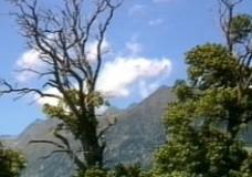 Kastanien in Tirol – eine Kulturgeschichte