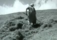 Bergheuernte im Gsiestal